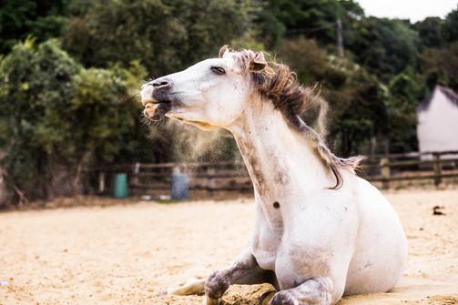 Photographe Equestre 16.jpg