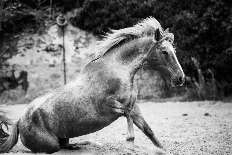 Photographe Equestre 14.jpg