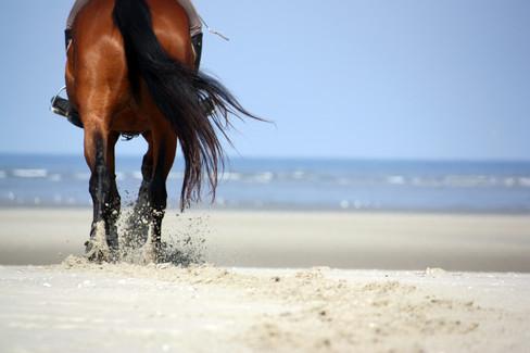 Photographe Equestre 96.jpg