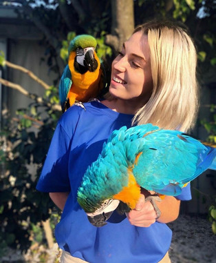 Blue and Gold Macaws.jpeg