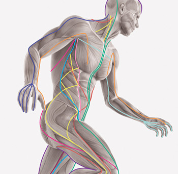 How does stress & trauma/illness affect our fascia (and how Pilates can help)