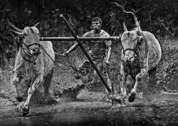 Mud_Bull_Racing__Infia.JPG