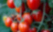 grape tomatoes.jpg