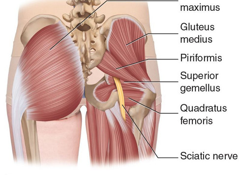 The Posterior Powerhouse - Build those Glutes