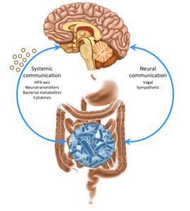 Comunicação bidirecional microbiota-cérebro. Fonte: Mayer etal,2014