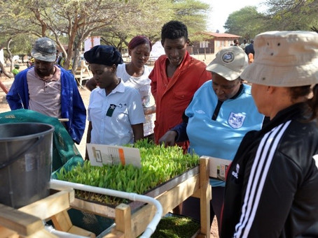 Designing an affordable hydroponic system for farmers in Rural Botswana.