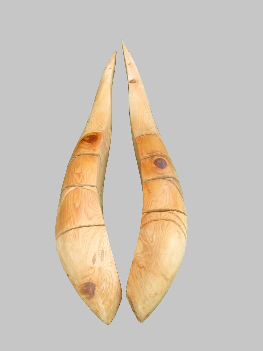 Duo de graine cèdre