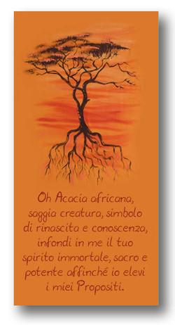 AcaciaAfricana