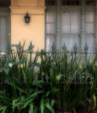 Dense Garden