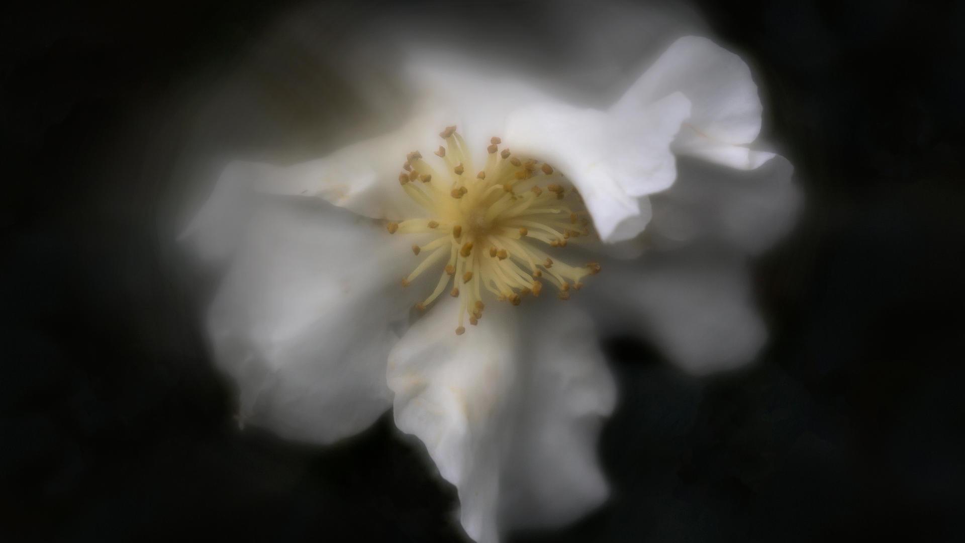 Don_1. Serene.jpg