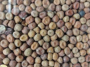 maple peas cover crop.jpg