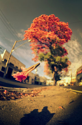 Fall of a Flower