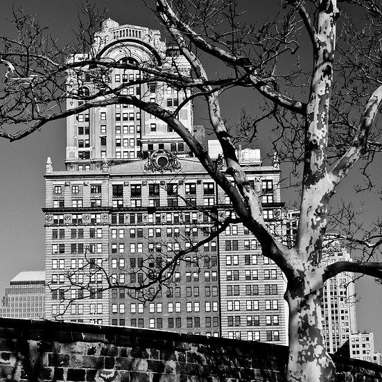Buildings & Trees 02
