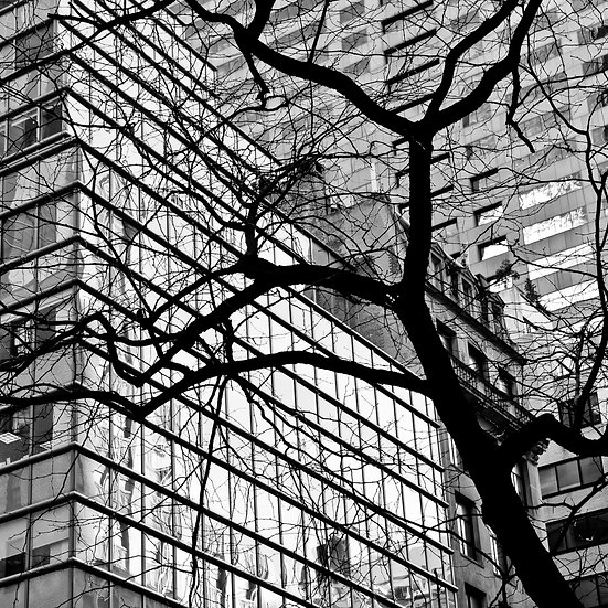 Buildings & Trees 01
