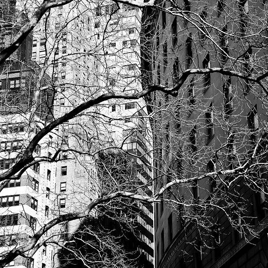 Buildings & Trees