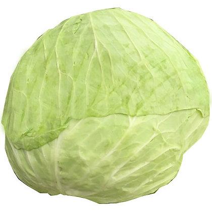 Taiwan Cabbage