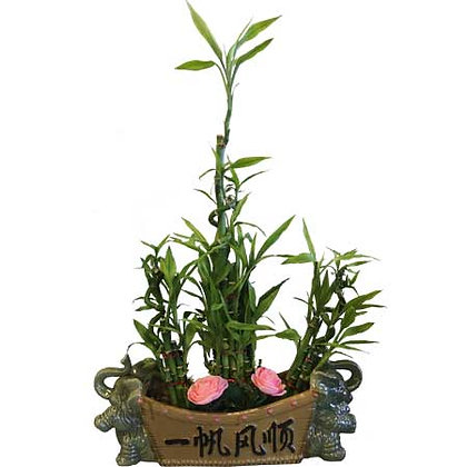 Fortune Bamboo Pot