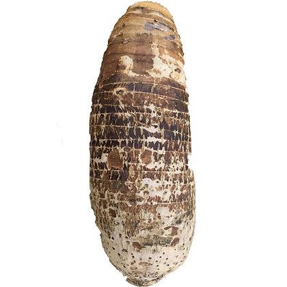 Big Taro Root