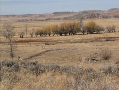 horse creek 2.PNG