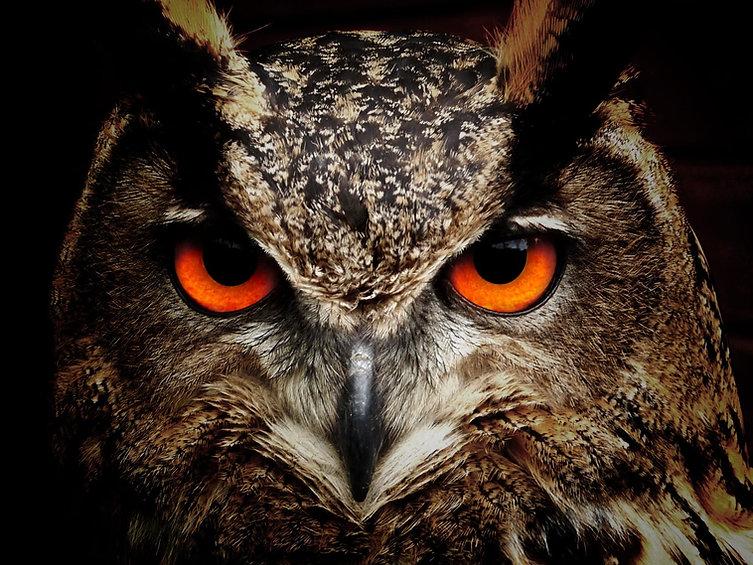 owl-bird-eyes-eagle-owl-86596.jpg