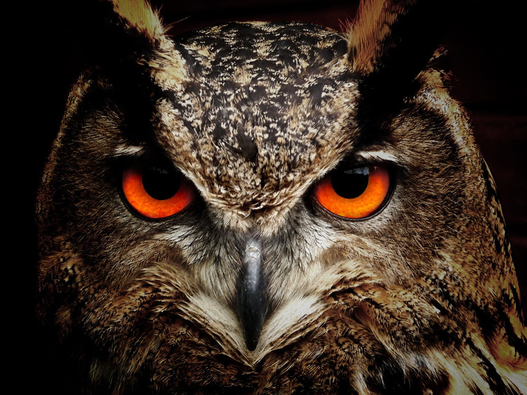 owl-bird-eyes-eagle-owl-86596.jpg