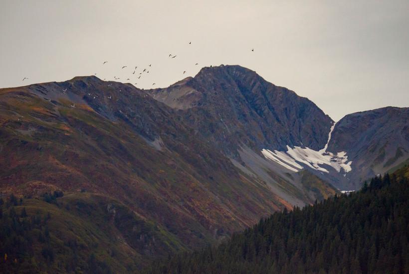 STEAMSEAS_Alaska-297.jpg