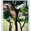Thumbnail: מסור גבהים מקצועי WOLF-Garten PC-SP370