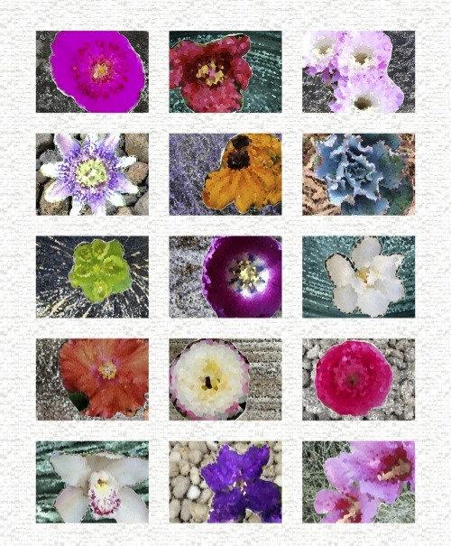 Flower Garden Panel | Homeward Collection | Windham Fabrics