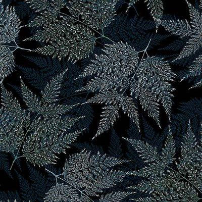 Ferns in Midnight/Silver | A Little Birdie Told Me Collection | Hoffman Fabrics