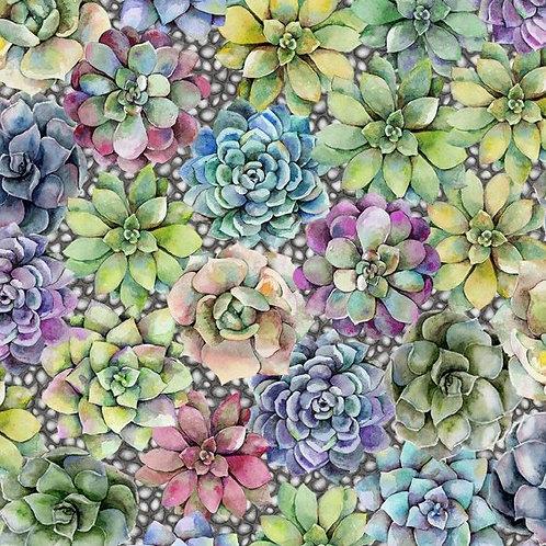 Succulents   Terrarium Collection   In The Beginning