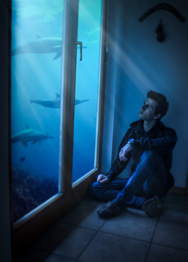 Watching Dolphins Through Windows