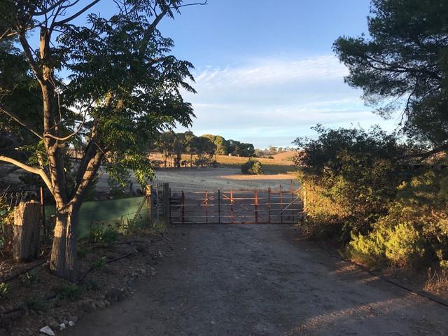 Pinecone Ridge Views