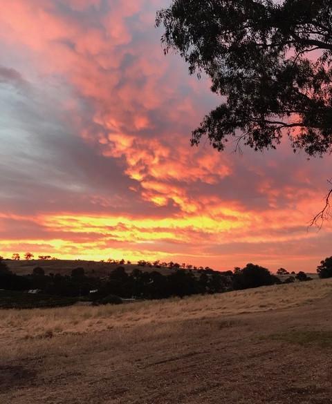 Sun Set Pinecone Ridge