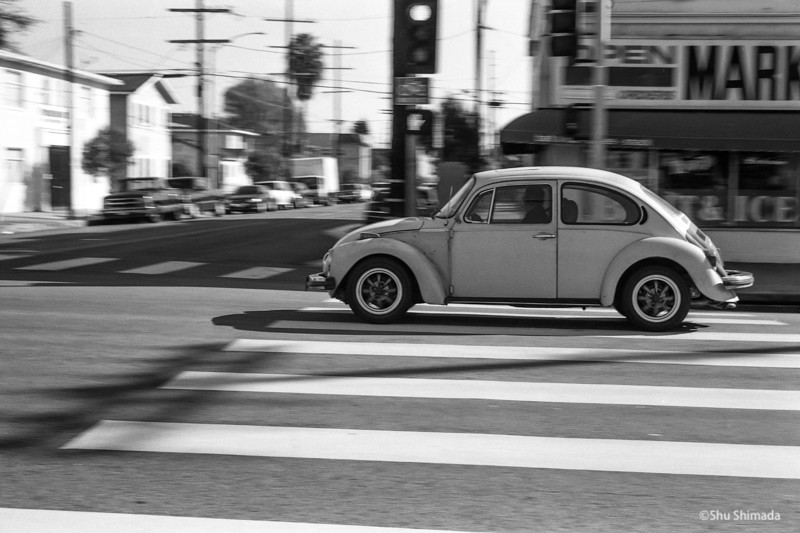 Cross Walk Beetle