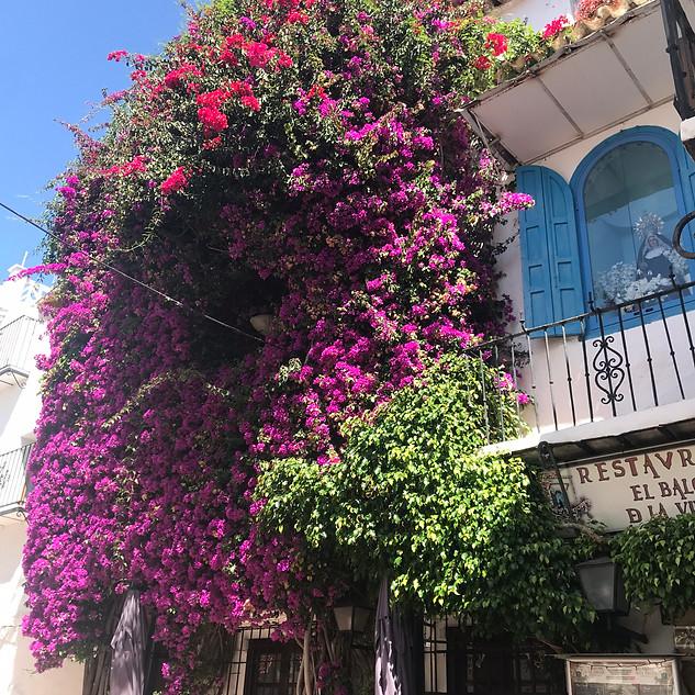 flowers old town iphone.jpg