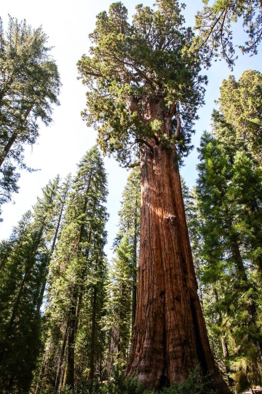 world's biggest tree sequoia national park