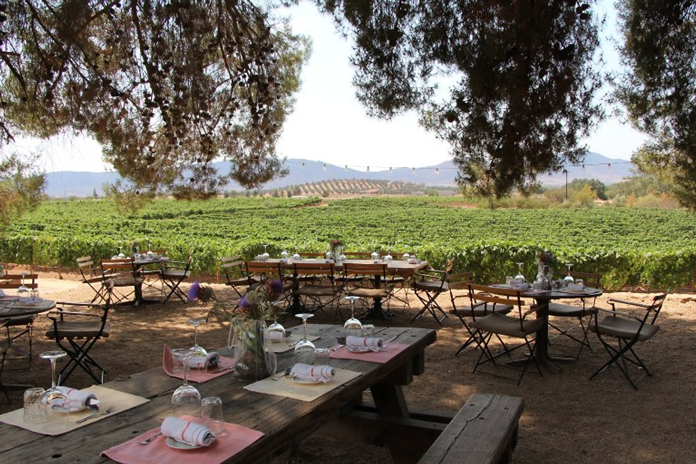 Deckmans in Baja Wine Country