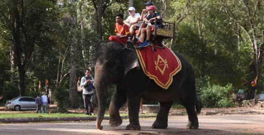 thai smiles - don't ride elephants