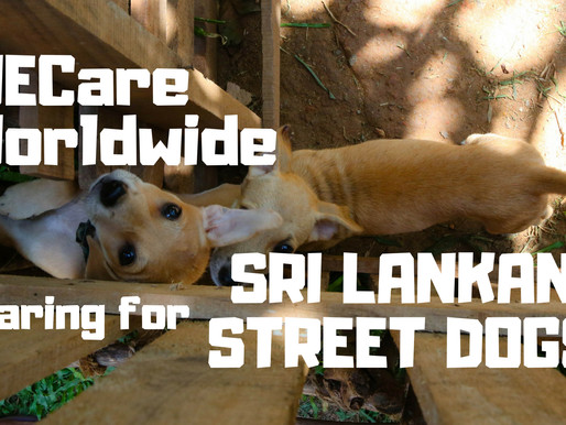 WECare Worldwide – Caring For Sri Lankan Street Dogs