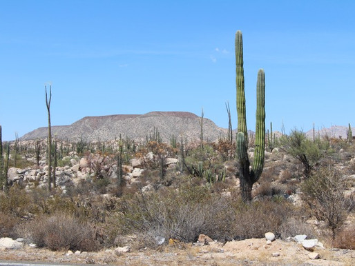From Norte to Sur! A Baja Mexico Road Trip