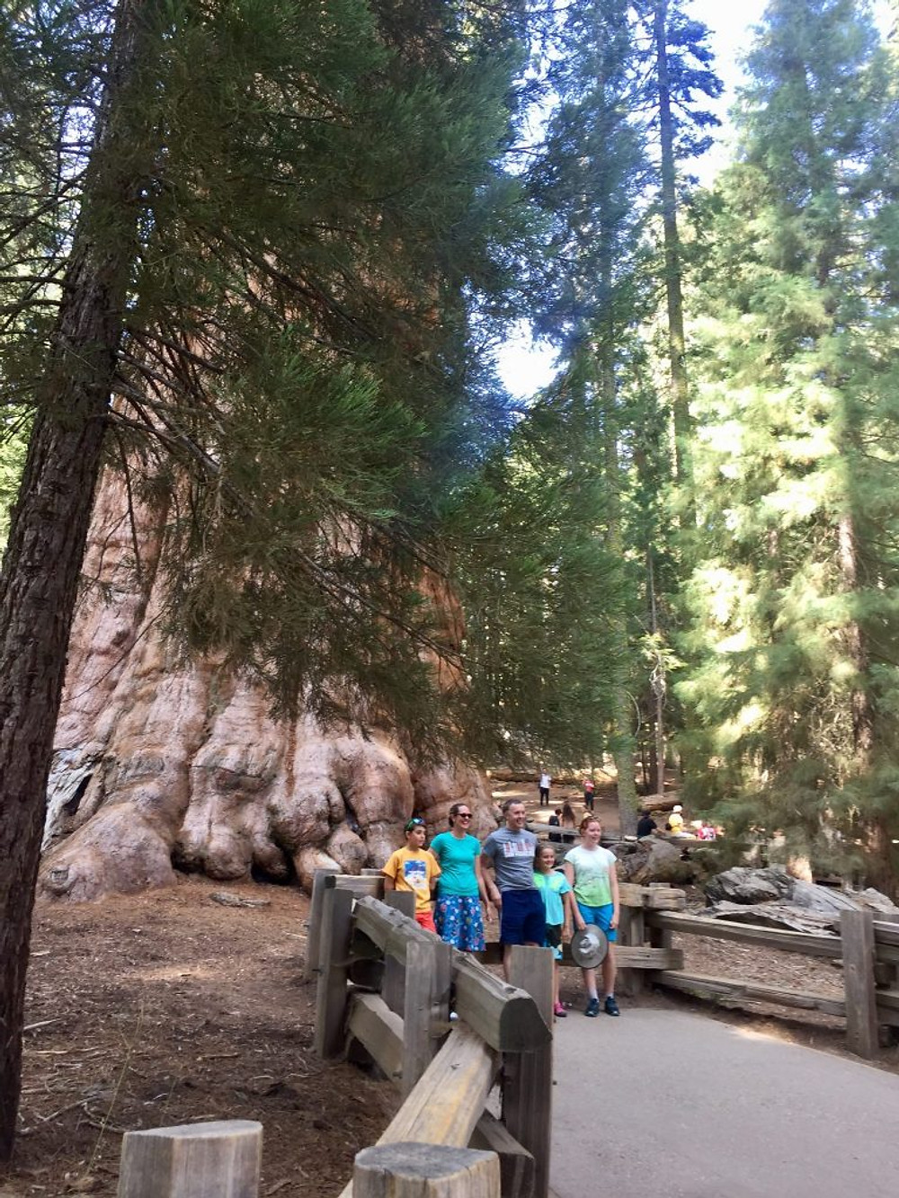 sherman tree sequoia national park