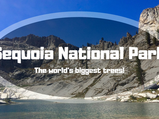 Sequoia National Park – The World's Biggest Trees
