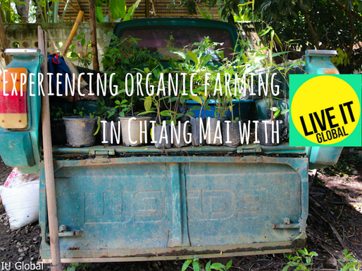 Organic Farming in Chiang Mai with Live It Global