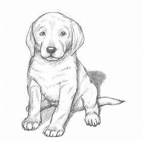 Puppy sketch.jpg