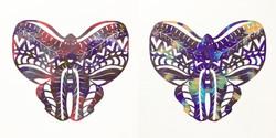 99 Pairs of Butterflies 23