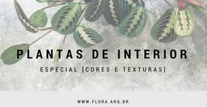 plantas de interior, especial [CORES E TEXTURAS]