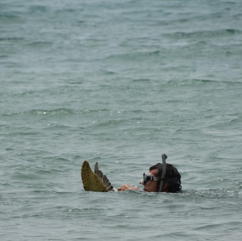 Biólogo do Projeto Tamar fazendo captura de tartaruga marinha para estudo.