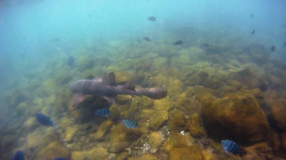 Tubarão no Sueste