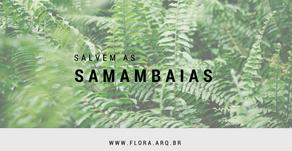 salvem as SAMAMBAIAS