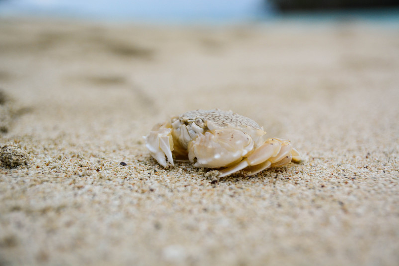 Ptit crabe, Baie de Kumo